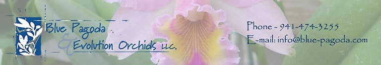 Blue Pagoda & Evolution Orchids LLC