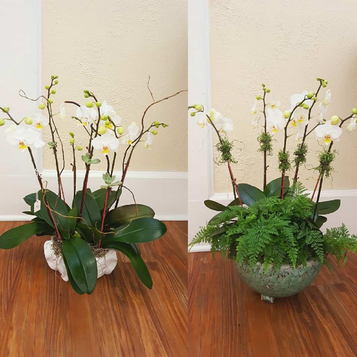 Orchids Pots - Photos Office and Pot Dianxian2007.Com